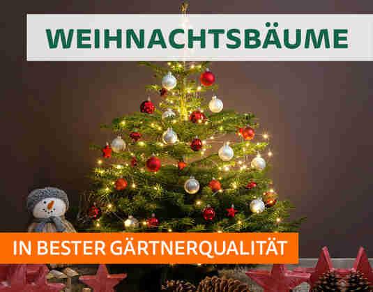 + (3) Weihnachtsbäume +