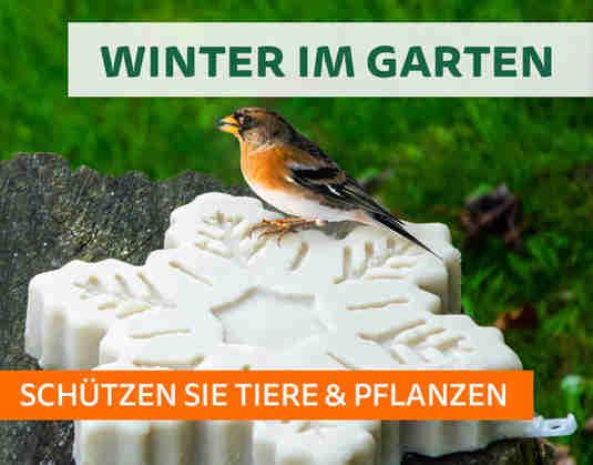 + (2) Winter im Garten +