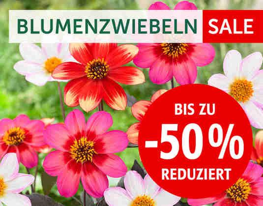 + (2) Blumenzwiebeln-Sale +