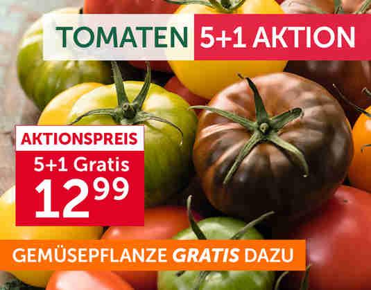 + Tomaten 5+1 Aktion +