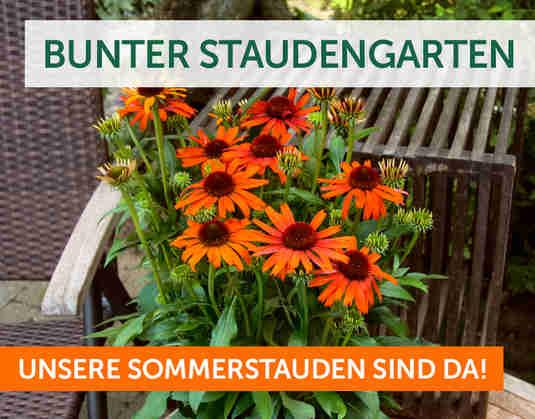 + Bunter Staudengarten +