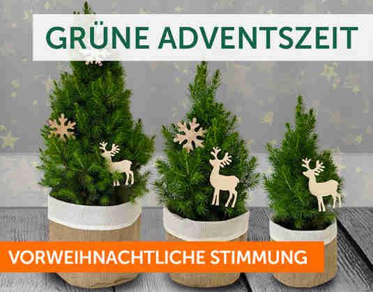 + Grüne Adventszeit +