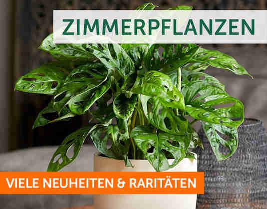 + Zimmerpflanzen +