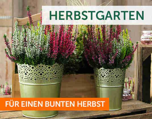 + Bunter Herbstgarten +