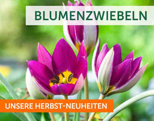 + Blumenzwiebeln +