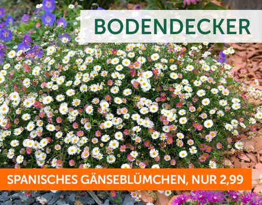 + Bodendecker +