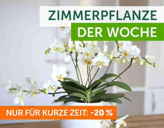 + Zimmerpflanze der Woche +
