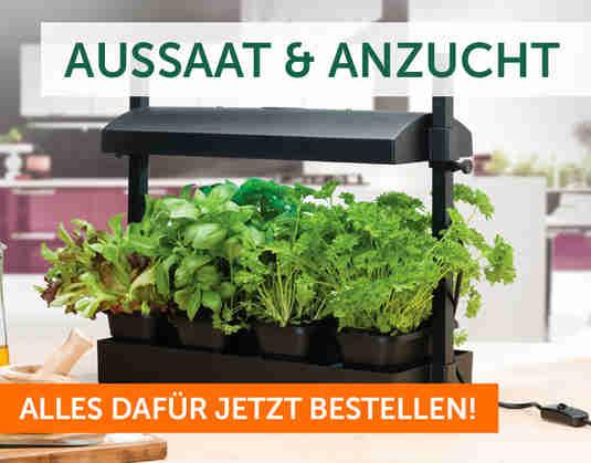 + Aussaat & Anzucht +