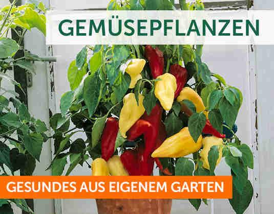 + Gemüsepflanzen +