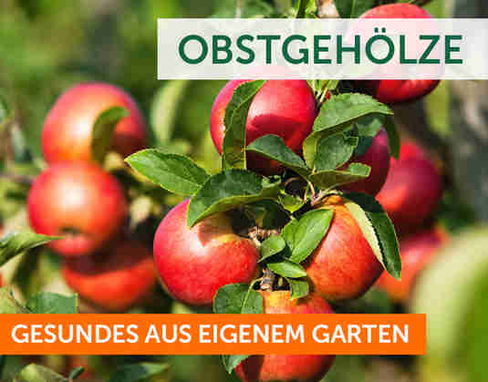 + Obst +
