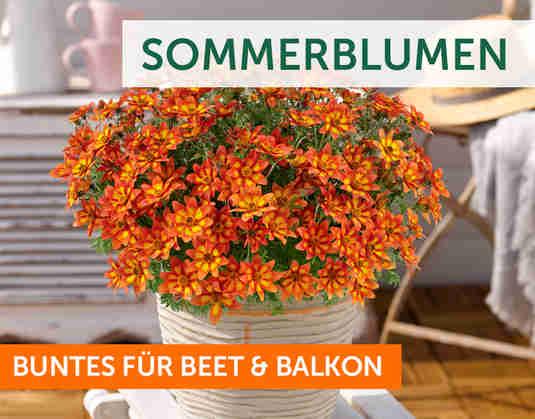 + Sommerblumen +