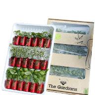 Mini-Küchenpflanzen The Gardians