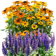 Zierpflanzen