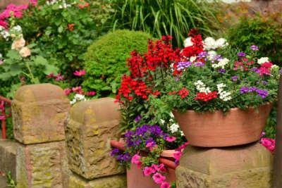 Sommerblumen in einem Pflanzkübel