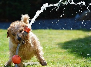 Gartenbewässerung Hund