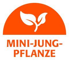 Mini-Jungpflanze